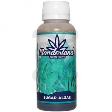 Sugar Algae