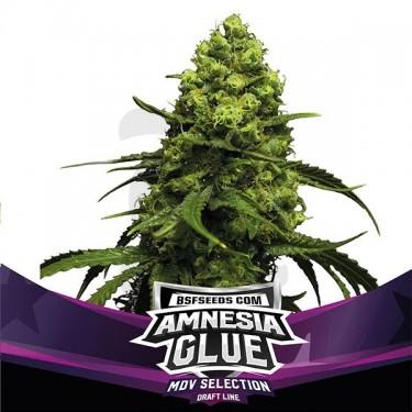 Amnesia Glue