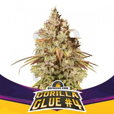 Gorilla Glue4