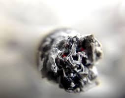 lavado de raíces en plantas de marihuana