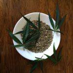 ¿Por qué me han fallado las semillas de marihuana?
