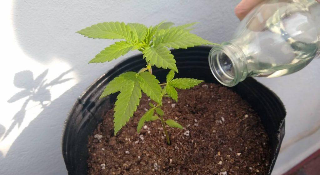 importancia del agua en las plantas